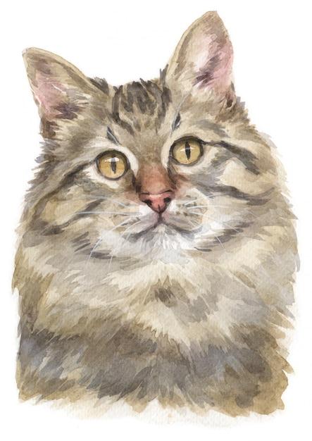 Aquarelle de chat sibérien Photo Premium