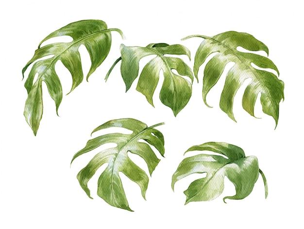 Aquarelle de feuilles sur blanc Photo Premium