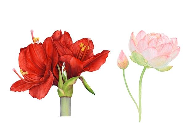 Aquarelle de fleurs rouges et roses sur fond blanc. Photo Premium