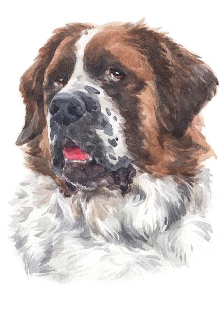 Aquarelle d'une grande race de chien saint-bernard Photo Premium