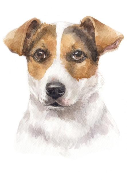 Aquarelle De Jack Russell Terrier Photo Premium