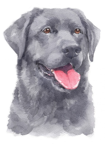 Aquarelle De Labrador Retriever Photo Premium
