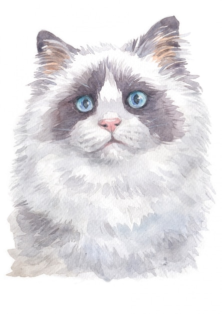 Aquarelle de ragdoll Photo Premium