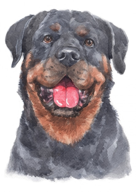 Aquarelle de rottweiler Photo Premium