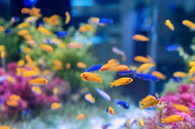 Aquarium à l'orange et le poisson bleu Photo gratuit