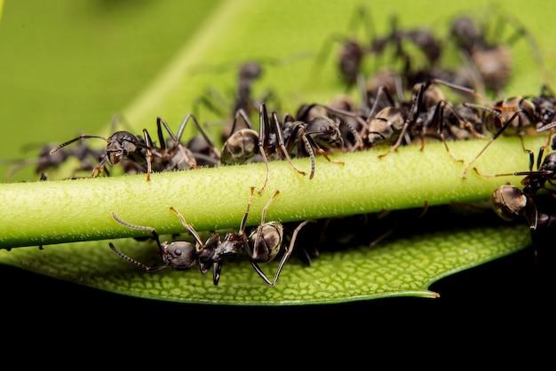 Araignée sauteuse habitat naturel prédateur Photo gratuit