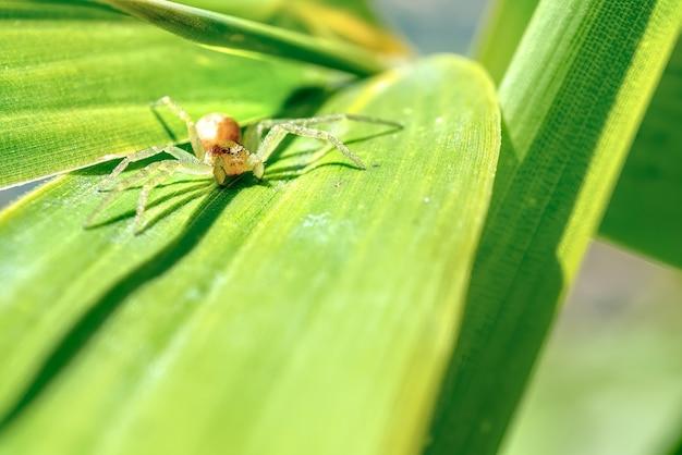 Araignée Se Cachant Dans Les Feuilles, Dans Le Jardin Photo gratuit
