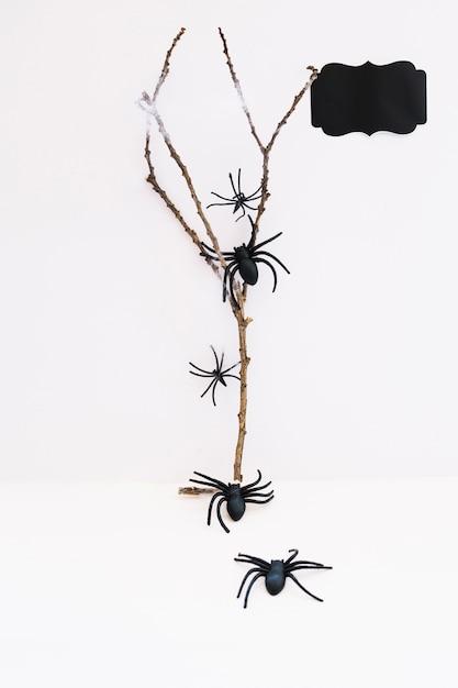 Des araignées se rampant sur une branche Photo gratuit