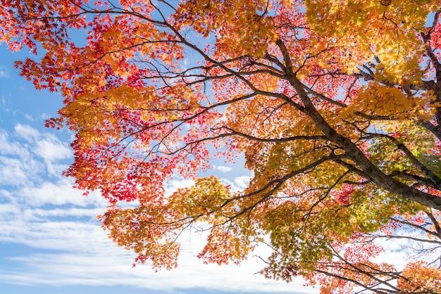 Arbre d'automne Photo Premium