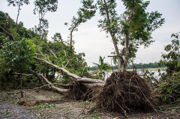 L'arbre a été détruit par l'intensité de la tempête Photo Premium