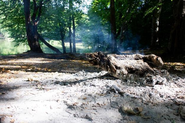 Arbre En Feu Dans La Forêt Photo Premium