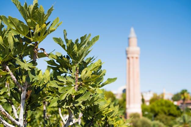 Arbre Avec Des Figues Au Premier Plan. Minaret De La Mosquée En Arrière-plan. Photo Premium