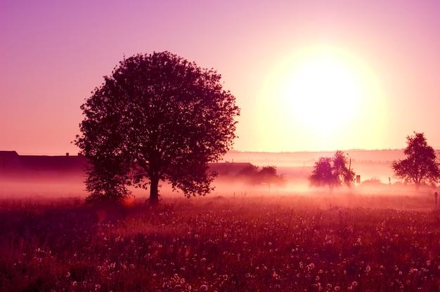 Arbre avec un grand soleil Photo gratuit