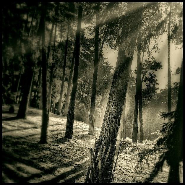 Arbre humeur mystique forêt lumière du soleil en arrière vous connecter Photo gratuit