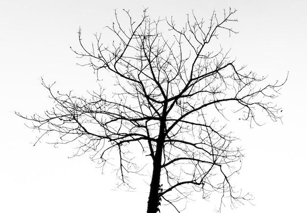 Arbre mort silhouette pour la fête d'halloween. Photo Premium