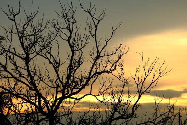 Arbre d'ombre silhouette sur ciel coucher de soleil se sentir comme seul Photo Premium