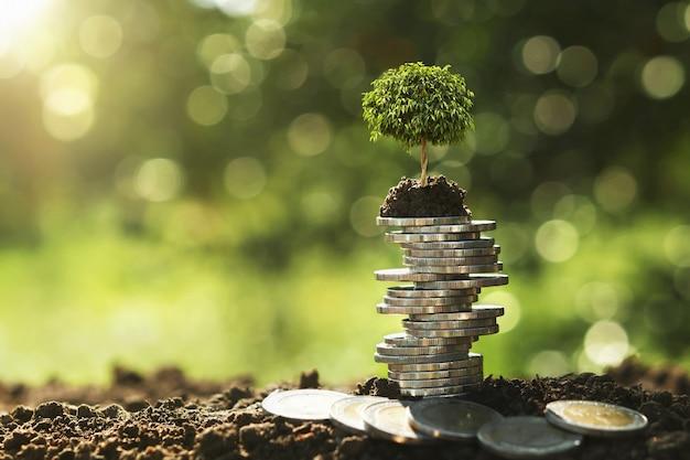 Arbre qui pousse sur la pile de pièces dans la nature avec le soleil Photo Premium