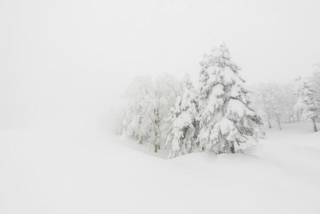 Arbre recouvert de neige sur le jour de l'orage d'hiver dans les montagnes forestières Photo gratuit