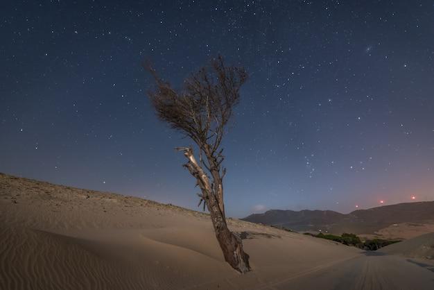 Arbre sec isolé sur une dune de sable au bord d'une route la nuit dans le sud de l'espagne Photo Premium