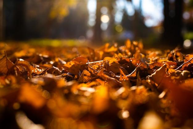 Arbre sec laisse dans le sol, le vieux concept d'automne et la chaleur. Photo Premium