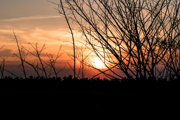 Arbre sec sans feuilles en hiver contre le coucher de soleil orange Photo Premium