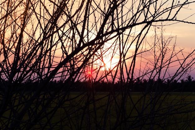 Arbre sec sans feuilles en hiver contre le lever du soleil coucher de soleil ciel magnifique fond de paysage Photo Premium
