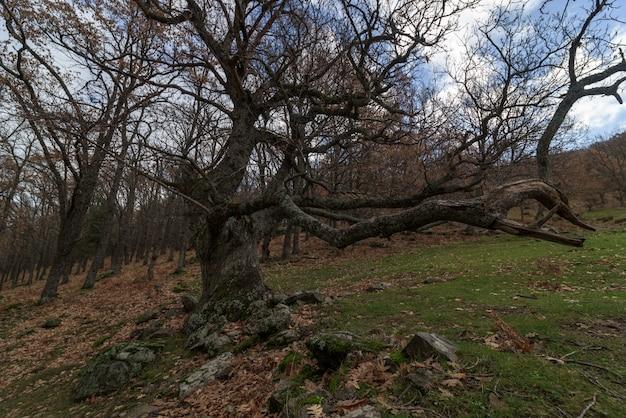 L'arbre sec Photo Premium