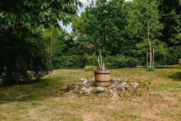 Arbre séché dans un pot en bois Photo Premium