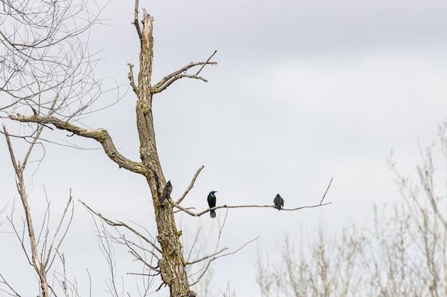 Arbre Séché Avec Des Oiseaux Sur La Branche Photo gratuit