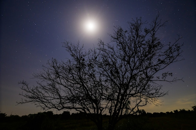 Arbre Silhouette Pendant La Nuit Avec Le Clair De Lune Photo Premium