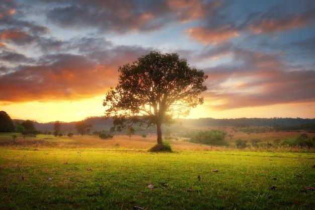 Arbre solitaire sur terrain avec magnifique coucher de soleil Photo Premium