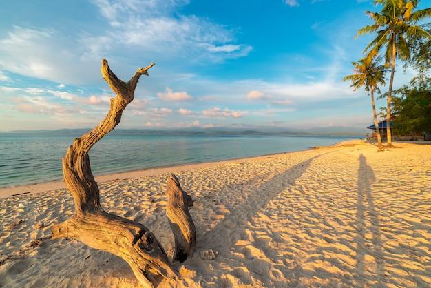 Arbre tressé sur la plage au coucher du soleil Photo Premium