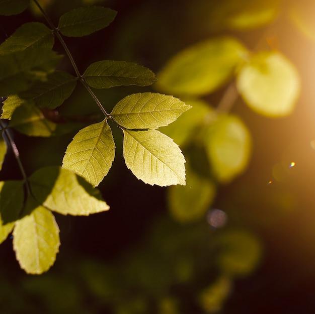 Arbre vert feuilles et branches dans la nature en automne, fond vert Photo Premium