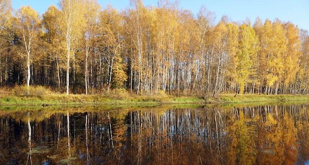 Arbres au feuillage jaune sur le lac. chute d'or. Photo Premium
