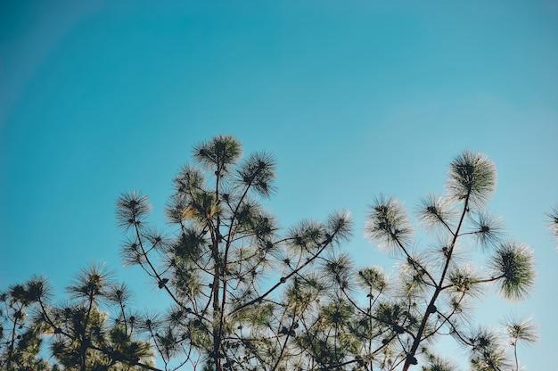 Les Arbres Et Le Ciel Se Produisent Naturellement. Vert Et Bleu Formulé Sous Forme Naturelle. Photo Premium