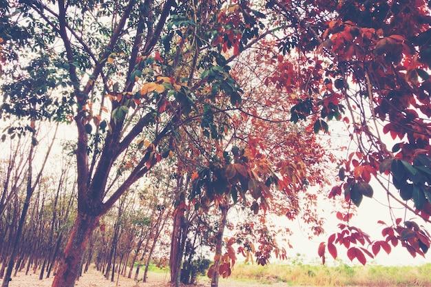 Arbres colorés au printemps Photo Premium