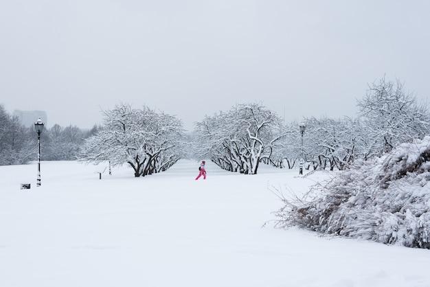 Arbres couverts de neige dans le jardin d'hiver. le conte de l'hiver au parc kolomenskoye. Photo Premium
