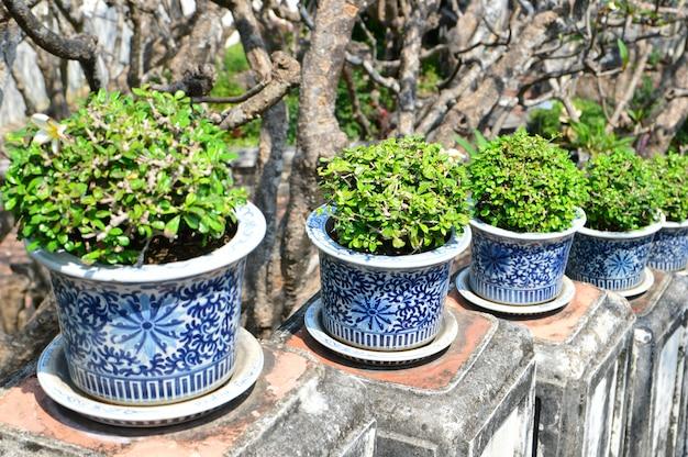 Arbres dans de beaux pots de fleurs Photo Premium