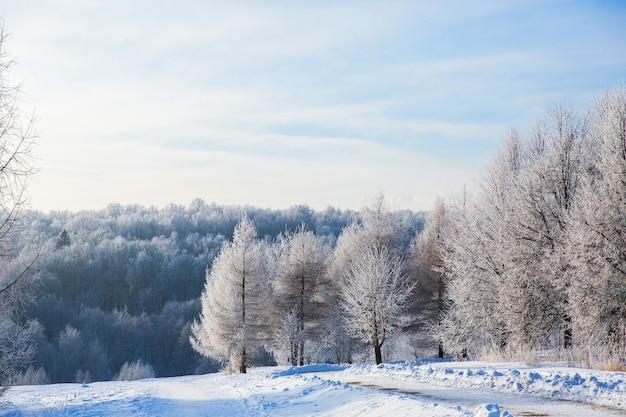 Arbres enneigés blancs dans la forêt d'hiver et le ciel bleu clair. beau paysage Photo Premium