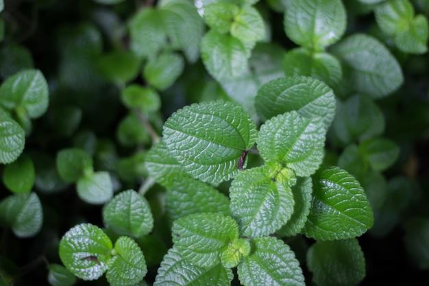 Arbres et feuilles vertes dans le jardin Photo Premium