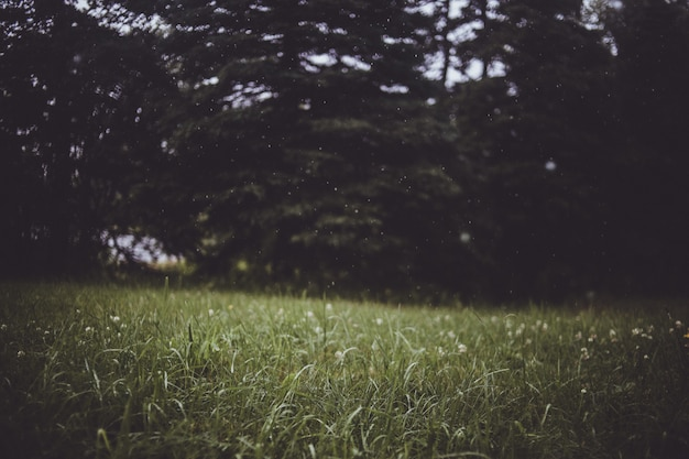 Arbres Feuillus Verts En Bordure De Pelouse D'herbe Verte Photo gratuit