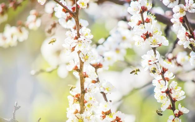 Arbres A Fleurs De Printemps Jardin Fleuri Nature De La Mise Au
