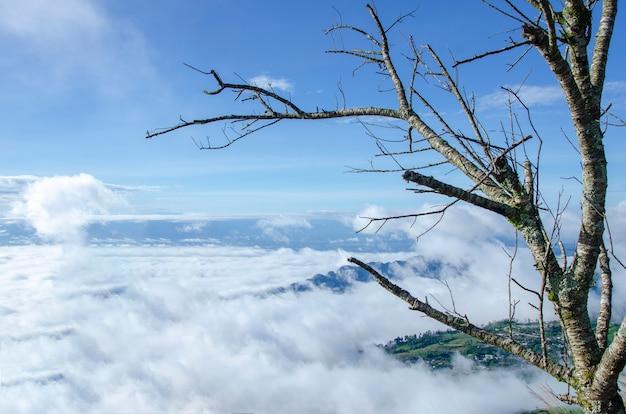 Arbres avec fond de montagne et ciel Photo Premium