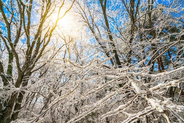 Arbres Gelés En Hiver Avec Un Ciel Bleu Photo gratuit