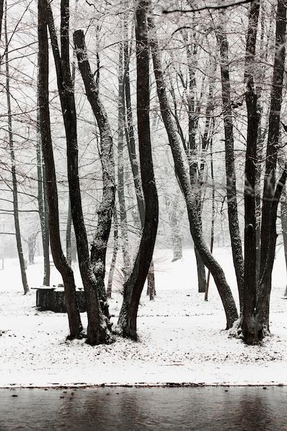 Arbres Gelés D'hiver Et Rivière Photo gratuit