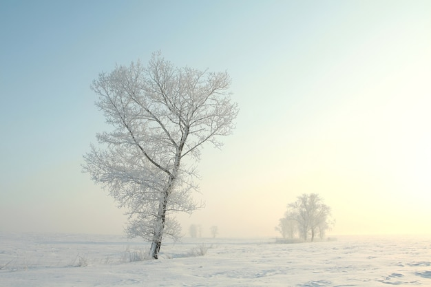 Arbres D'hiver Glacial Contre Le Ciel Bleu à L'aube Photo Premium