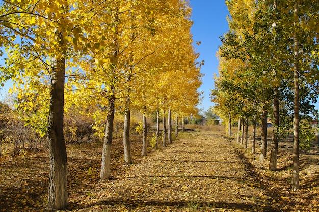 Arbres jaunes et verts dans un parc tranquille. concept de l'automne. Photo Premium