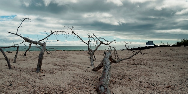 Arbres Morts Sur La Plage Avec Kicker Rock En Arrière-plan, île San Cristobal, îles Galapagos, équateur Photo Premium