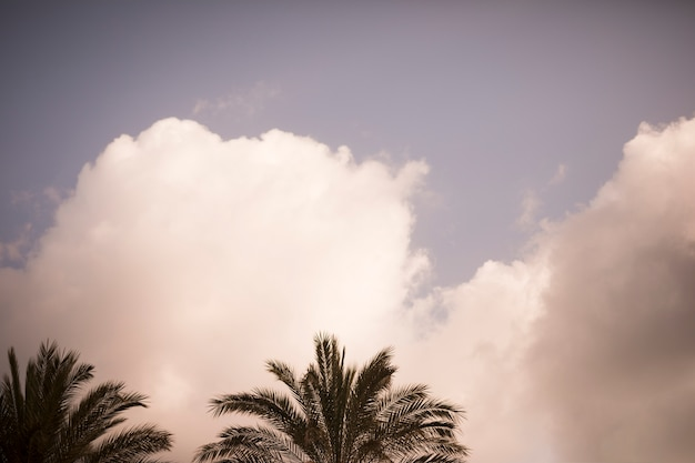 Arbres de noix de coco dans le ciel avec des nuages blancs Photo gratuit
