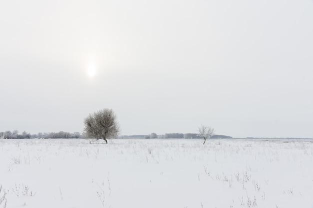 Les arbres et le paysage d'hiver Photo Premium